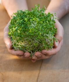 10 Reasons To Love Sprouts (Plus DIY Sprouting At Home)