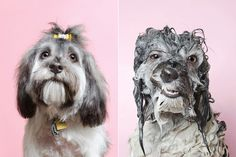 Adorable Photos Of Wet Dogs Will Make You Ponder The Meaning Of Bath Time