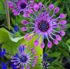 Flower shape for wool quilt  Purple Flower by Janice Sheehan, via Flickr