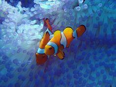 @underthesea_24 . . . #australia #cairns#portdouglas#queensland#greatbarrierreef#ocean#sea#skindiving #underthesea#coral#outerreef#snorkeling#skindiving#diving#easternclownanemonefish#clownanemonefish#nemo by aquaticparadise http://ift.tt/1UokkV2