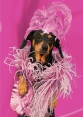 """Musical dachshund encouragement/friendship card, featuring the singing dachshund, Lucy Lou. Inside message: """"You go girl! Musical Cards, Black And Tan Dachshund, You Go Girl, Friendship Cards, Doggies, Musicals, Singing, Encouragement, Greeting Cards"""
