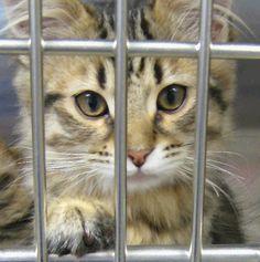 Tabby Kitten Behind Bars for...