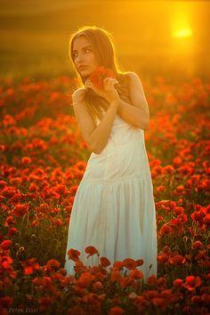 Photo poppy field No. 2. by Peter Zelei on 500px