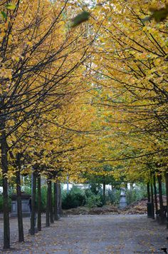 herbst im Park van Brussel, Brüssel, Belgien / autumn at Parc de Bruxelles, Brussels  - duftundliebe