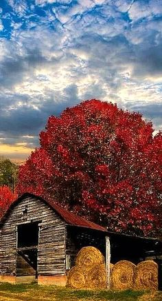 *Old Barn, round bales and burgundy foliage! Country Farm, Country Living, Country Roads, Old Farm, Farm Barn, Bunt, Old Houses, Farm Houses, Country Scenes