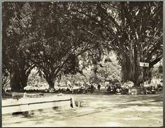 Aloon Aloon Malang 1920.
