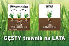 Jak uzupełnić dziury w trawniku? Oto niezawodny sposób! Drinks, Garden, Drinking, Beverages, Garten, Lawn And Garden, Drink, Gardens, Gardening
