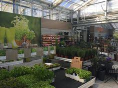 Essen aus eigenem Garten. Mit Jungpflanzen, Samen, Biodünger und Zubehör.