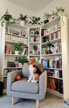 Home Library Rooms, Home Library Design, Home Libraries, Home Office Design, House Rooms, Room Design Bedroom, Home Room Design, Bedroom Decor, Corner Bookshelves