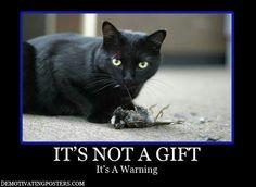 Niiiice kitty....