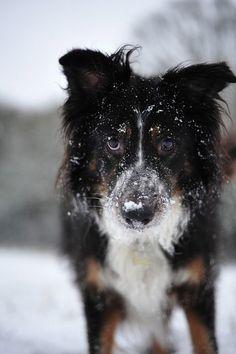 Dog - nice photo