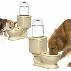 Sky would love this!  Maybe. . . she does love drinking from the real toilet. . . Yugster - Ceramic Toilet Shaped Pet Water Bowl
