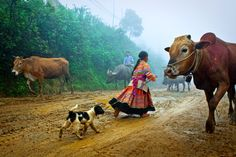 latest (microcredit) impact research: inching towards generalization. Photo Contest, Women Empowerment, Cow, Things To Sell, Photo And Video, Animals, Travel, Pageant Photography, Animales