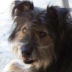 Our dog Breeze. Elaine & Lloyd, Sunland, CA. 5/14/13.
