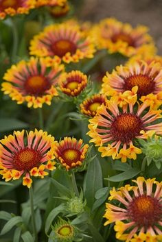 With a little extra care, these perennials will bloom two times (or more!) this summer. #FlowerGardens