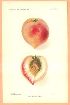 everything i make is a shade of peach. peach peach peach