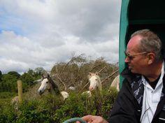Europe Travel: Seeing Ireland in a horse-drawn caravan - thestar.com