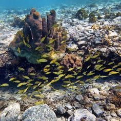 Reef, STX