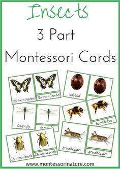 Insects 3 Part Montessori Nomenclature Cards | Montessori Nature