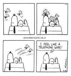 First Appearance: July 16th, 1977 #peanutsspecials #ps #pnts #schulz #snoopy #woodstock #telephonewire www.peanutsspecials.com