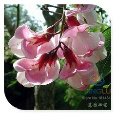 Роза акация, Робиния fertilis ызрша, 50 семян, Розовый цвет, Пушистый дерево, Великий хедж триммер, Птицы бабочки купить на AliExpress