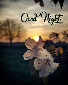 Good Morning Beautiful Pictures, Good Night I Love You, Good Night Love Images, Good Night Messages, Good Night Sweet Dreams, Good Morning Flowers, Good Night Image, Good Morning Good Night, Good Night Quotes