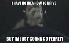 Just Go Ferret!