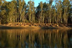 Banks of the Murray river on the wahgunyah side from Corowa.