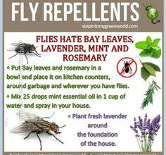 DIY Fly repellant