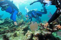 #Scuba divers transplanting coral reef in the Florida Keys? #oceans #scubadiving