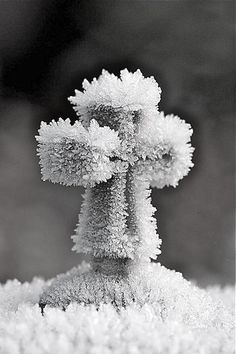 frost bitten cross