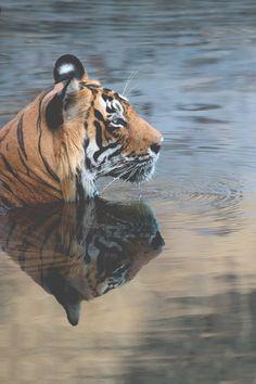 #animals #beautiful #photography  Follow me!: http://pinterest.com/johncliffway