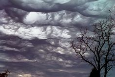Have You Seen An Undulatus Asperatus Cloud?