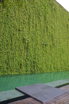 Wall Green Architecture Spaces 20 New Ideas Green Architecture, Landscape Architecture, Landscape Design, Garden Design, House Design, Garden Pool, Green Garden, Garden Landscaping, Tropical Garden