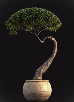 Bonsai  -for the conservatory
