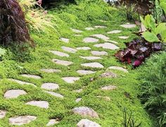 Stones set amid this creeping groundcover makes a natural looking path.