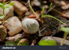 Find Closeup On Snails White Shell Sitting stock images in HD and millions of other royalty-free stock photos, illustrations and vectors in the Shutterstock collection. Thousands of new, high-quality pictures added every day. Snail White, Close Up, Insects, Photo Editing, Royalty Free Stock Photos, Image, Editing Photos, Photo Manipulation, Image Editing