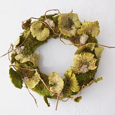 Shelf Mushroom & Moss Wreath > Collected wild shelf mushrooms and other wild woody pieces
