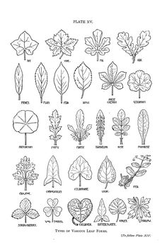 Image result for How to draw a realistic leaf for middle school