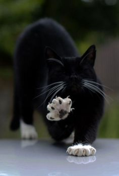 Mittens & claws!