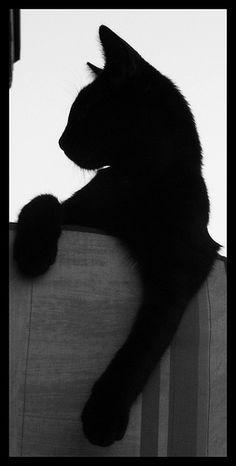 Black cat  Amon Profile