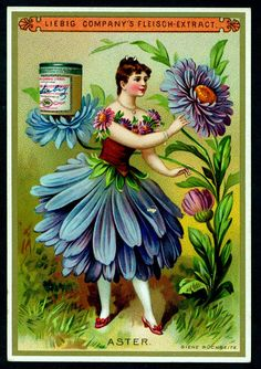 Aster Flower Girl trading card issued by Liebig Extract of Beef Company. Vintage Labels, Vintage Ephemera, Vintage Cards, Vintage Postcards, Vintage Images, Aster Flower, Vintage Seed Packets, Retro Poster, Flower Fairies