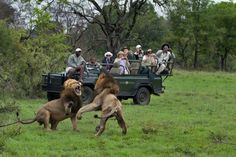 Want to easily book your Safari adventure? Book packages made by experts for easy & value for money Safari bookings! Book your African experience now! Game Reserve South Africa, South Africa Tours, South Africa Safari, Tanzania Safari, Kruger National Park, National Parks, Sand Game, Safari Holidays, African Safari