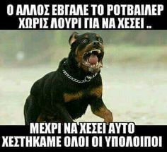 Funny Greek Quotes, Greek Memes, Funny Picture Quotes, Funny Photos, Cute Quotes, Funny Cat Memes, Funny Texts, Very Funny Images, Funny Statuses