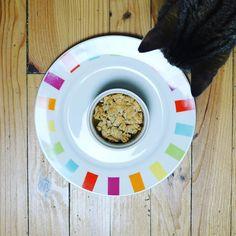 Je m'apprêtais à faire ma photo de crumble à la pomme de ma femme pour le challenge #flow29jours sur le thème dans mon assiette quand tout d'un coup... notre #chat se pointe pour le gouter ! #flowmagazine_fr