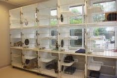 「cat boarding cages」の画像検索結果