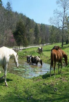 "* * WHITE HORSE: "" Hay, ya knowz fish pee in der. Betters to drink from de barnyard trough."""