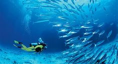Scuba dive at Ningaloo Reef in Australia. It's a great, less-crowded alternative to the Great Barrier Reef.