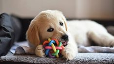 How to get your house ready for a new puppy | Stuff.co.nz