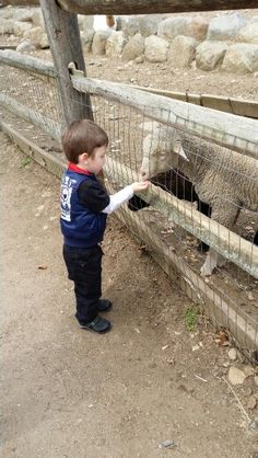 At the petting zoo.